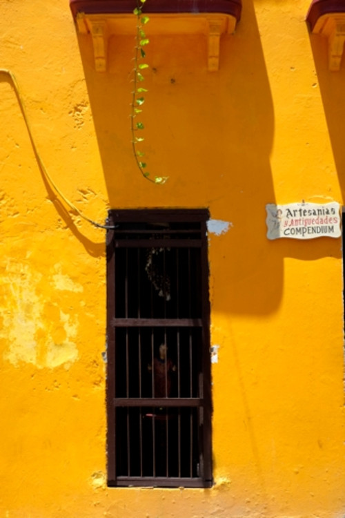 Wall_cartagena01